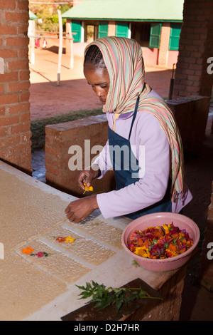 Madagascar, Ambalavao, woman laying flower petals in Antaimoro Avoha hand made paper - Stock Photo
