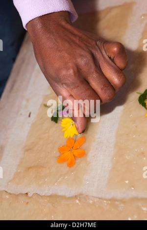 Madagascar, Ambalavao, hand laying flower petals into Antaimoro Avoha hand made paper - Stock Photo