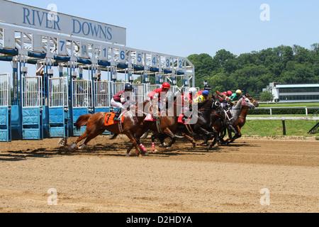 Horses at the Starting Gates. - Stock Photo
