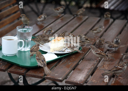 Berlin, Germany, sparrows snacking on a cake in a street cafe - Stock Photo