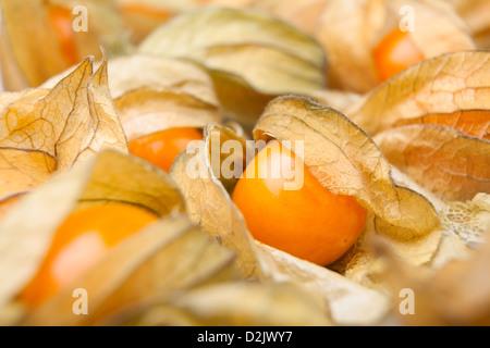 physalis many full frame closeup - Stock Photo