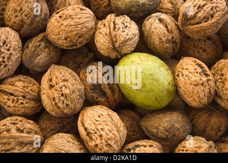 Harvested walnuts - Stock Photo