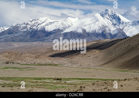 Camel caravan at the foot of the Kongur Tagh (7649m), in the Pamir mountains, Xinjiang province, China - Stock Photo