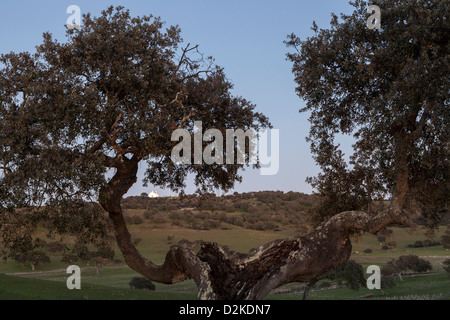 rural landscape of castro verde in the alentejo portugal and the historical church of