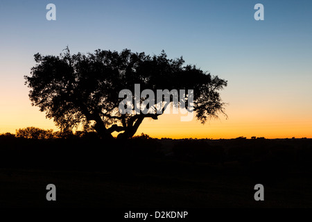 Lonely tree at sunset in the Alentejo, Portugal - Stock Photo