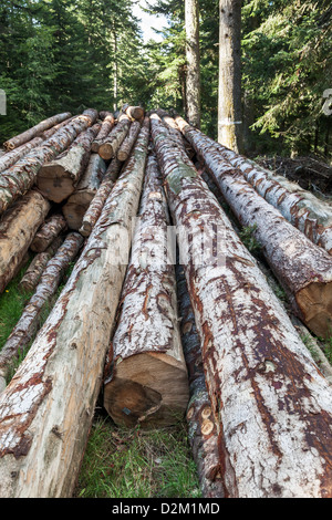 Stacked tree logs near Saint-Antheme in Auvergne region of France - Stock Photo