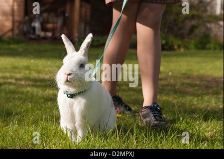 Teenager girl walking an English butterfly white rabbit on a lead on a lawn with daisies with harness - Stock Photo