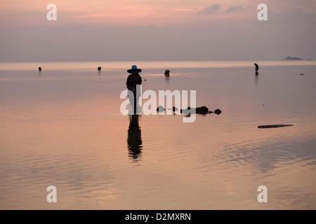 Clam picking on Koh Phangan island , Thailand - Stock Photo