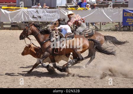 Cowboy Calf Roping At The Rodeo Event Bruneau Idaho Usa
