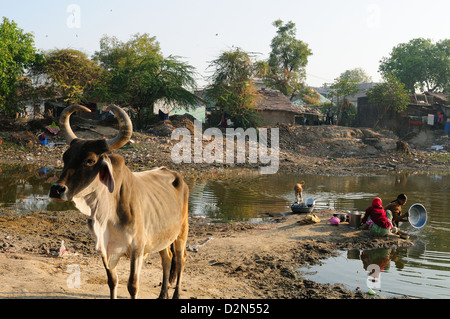 Washing vessels in stagnant water of pond also used by cattle, behind houses, Gujarat, India, Asia - Stock Photo