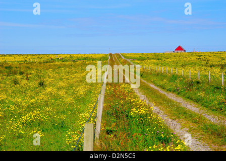 Orkney farm and a red house, Westray, Orkney Islands, Scotland, United Kingdom, Europe - Stock Photo