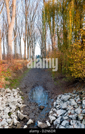 bed, blue, bush, color image, day, drought, dry, environment, environmental conservation, eroded, forest, germany, - Stock Photo