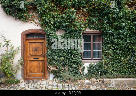 door and window of a house covered by ivy - Stock Photo