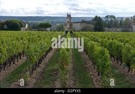 Vineyard, Chinon, Indre-et-Loire, Touraine, France, Europe - Stock Photo