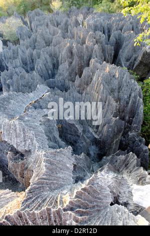 Tsingy de Bemaraha Strict Nature Reserve, near the western coast in Melaky Region, Madagascar - Stock Photo