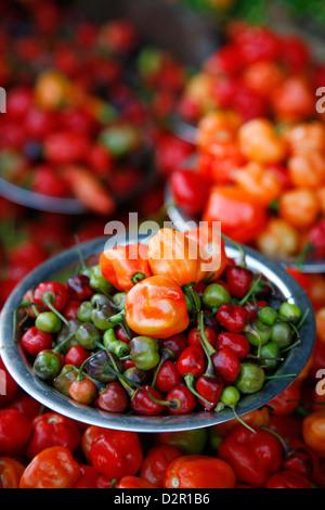 Peppers at Sao Joaquim market, Salvador (Salvador de Bahia), Bahia, Brazil, South America - Stock Photo