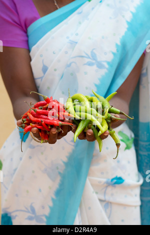Rural Indian village woman holding fresh green and red chilies in her hands. Andhra Pradesh, India - Stock Photo