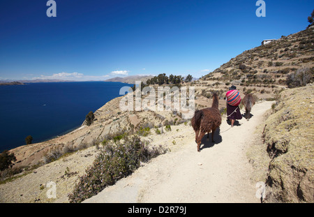 Woman walking llamas along path, Isla del Sol (Island of the Sun), Lake Titicaca, Bolivia, South America - Stock Photo