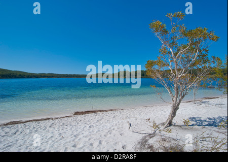McKenzie Lake, Fraser Island, UNESCO World Heritage Site, Queensland, Australia, Pacific - Stock Photo