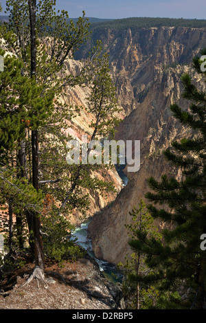 Grand Canyon of the Yellowstone River, from Grand View, Yellowstone National Park, Wyoming, USA - Stock Photo