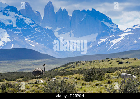 Ñandu (Darwin's or lesser rhea) in front of Los Torres, Torres del Paine National Park, Patagonia, Chile - Stock Photo