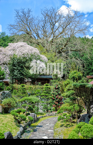 Japanese garden; part of a ryokan (traditional accommodation); garden with cherry blossom; spring; - Stock Photo