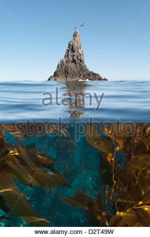Underwater photo of Anacapa and kelp, Channel Islands National Park, California, United States of America, North - Stock Photo