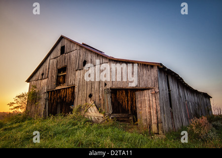 An old barn with hanging tobacco in Kentucky, USA. - Stock Photo