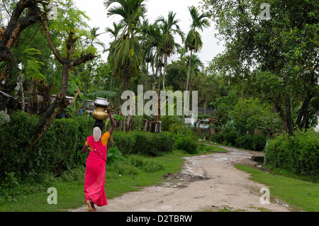 Woman carrying water, Assam, India, Asia - Stock Photo