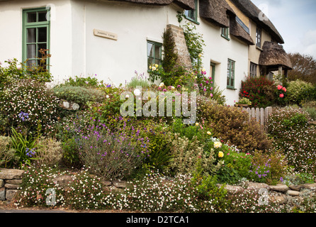 A thatched cottage with a colourful garden in the tiny coastal hamlet of Lower Eype near Bridport in west Dorset, - Stock Photo