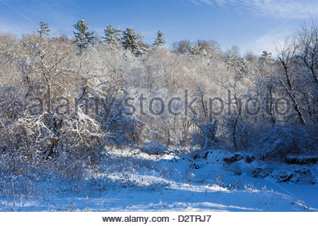 Snow covered forest and Little Rouge Creek in Rouge National Urban Park an urban wilderness in Toronto Ontario Canada - Stock Photo