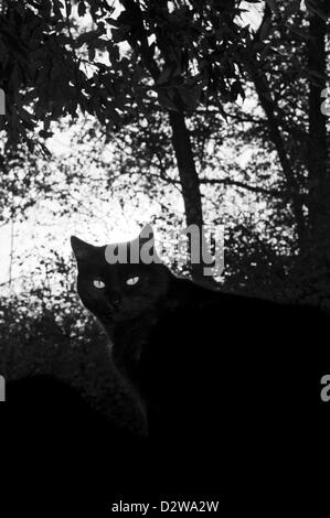 Black cat eyes in the shade of a forest - Stock Photo