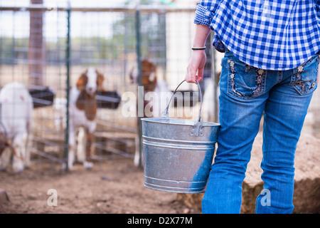 Female teenager feeding goats from a metal bucket on livestock farm - Stock Photo