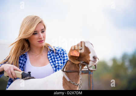Teenage girl trimming a show goat - Stock Photo
