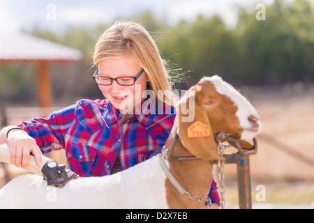 Girl is trimming a Boer goat to prepare it for a livestock show - Stock Photo