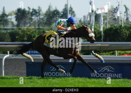 Barefoot Lady Ire 4 With Jockey David Moran Rides With
