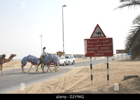A camel crossing point on a road at the International Endurance Village near Abu Dhabi - Stock Photo