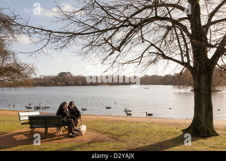 elderly couple sitting on bench by lake in winter sunshine with two scottie dogs - Stock Photo