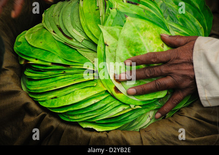 Man selling leaves for Diwali - Stock Photo