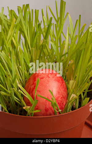 Red handmade easter egg in a brown flower pot with fresh green grass - Stock Photo