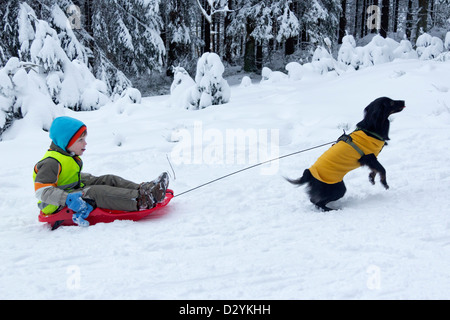 young boy on a sledge being pulled by his dog - Stock Photo