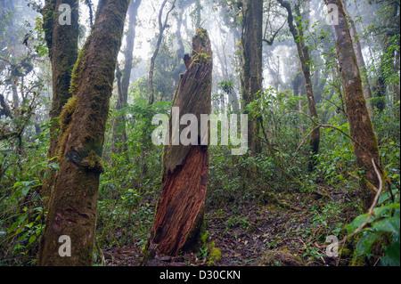 Parque Nacional Montana de Celaque, Gracias, Honduras, Central America - Stock Photo
