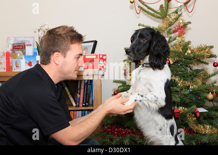 Young Millennial man with a black and white English Springer Spaniel pet dog standing on hind legs by a Christmas - Stock Photo