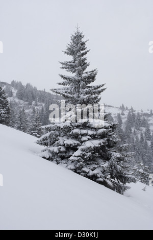 Snow-covered trees in Carpathians - Stock Photo