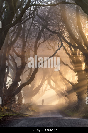 Silhouette figures under the Dark Hedges in Northern Ireland.. - Stock Photo