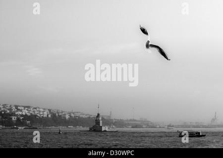 ISTANBUL TURKEY - Seagull flying over Maiden's Tower sits on a small islet off the coast of Uskudar, Bosphorus strait - Stock Photo