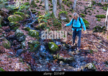 Female walker crossing small stream in autumn forest of beech trees, French Pyrenees - Stock Photo