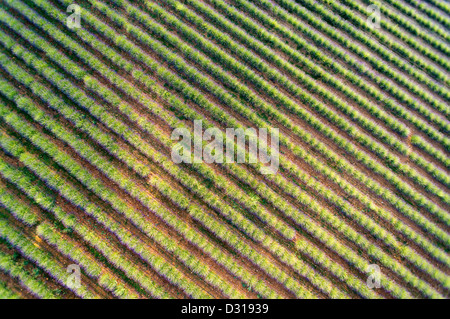 Lavender field in summer, Plateau de Valensole, Valensole, France (Aerial view) - Stock Photo