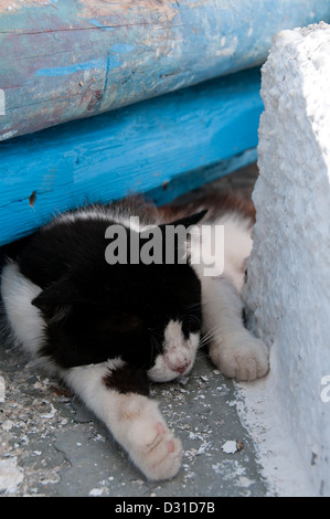 Asleep in the sun - a black and white cat chilling out in the afternoon sun. - Stock Photo