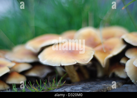 Close up artistic image of a cluster of small mushrooms and fungi around a cut tree stump on grass with shallow - Stock Photo